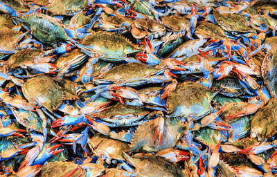 Photograph - Chesapeake Bay Blue Crabs by JC Findley