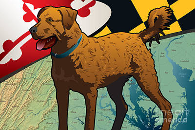 Chesapeake Bay Retriever Of Maryland  Art Print by Joe Barsin