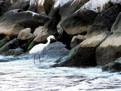 Photograph - Chesapeake Bay Wildlife by Kimmary I MacLean