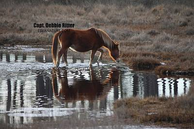Photograph - Chesnut Reflections by Captain Debbie Ritter