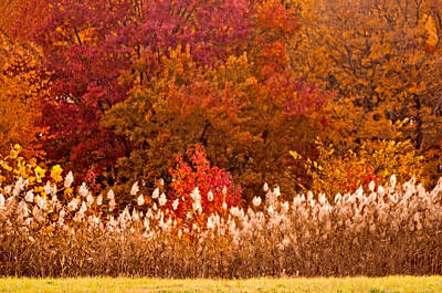 Photograph - Chester County Fall Foliage by Susan Maxwell Schmidt