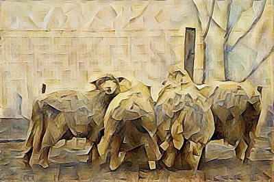 Chester County Sheep Art Print