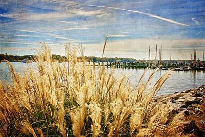 Photograph - Chestertown Grasses by Alice Gipson