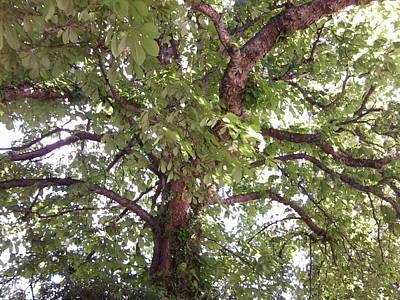 Photograph - Chestnut 1094 by Julia Woodman