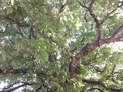 Photograph - Chestnut 1095 by Julia Woodman