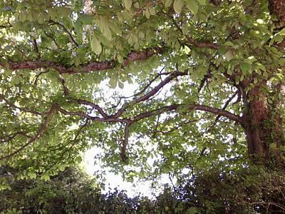 Photograph - Chestnut 1097 by Julia Woodman
