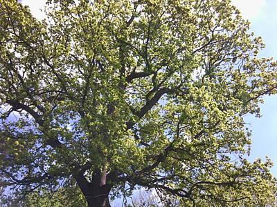 Photograph - Chestnut 1102 by Julia Woodman