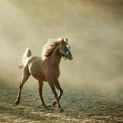 Arabians Photograph - Chestnut Arabian Horse by Christiana Stawski
