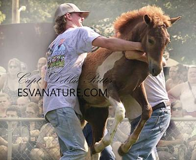 Photograph - Chestnut At Auction by Captain Debbie Ritter