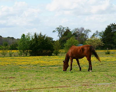 Photograph - Chestnut Horse In Buttercup Field by Katy Hawk