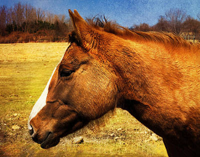 Photograph - Chestnut Horse  by Shawna Rowe