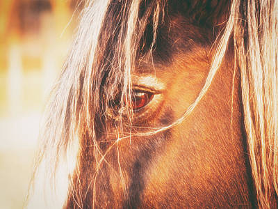 Photograph - Chestnut Mare by Wim Lanclus