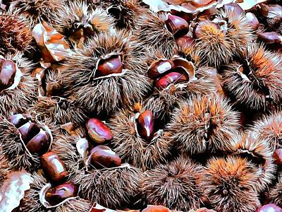 Photograph - Chestnut Overload by Dorothy Berry-Lound
