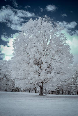 Photograph - Chestnut Ridge In Ir by Guy Whiteley