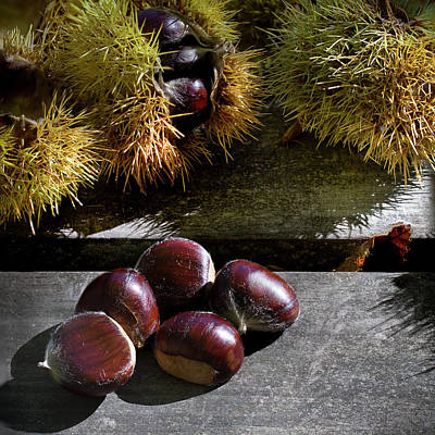 Photograph - Chestnuts 01 by Edgar Laureano