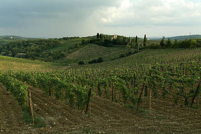 Chianti Vineyards In Tuscany Art Print by Todd Gipstein