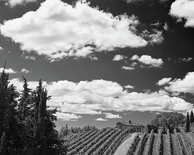 Photograph - Chianti Vineyards by Richard Goodrich