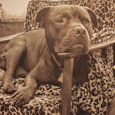 Photograph - Chic Dog by Jamart Photography