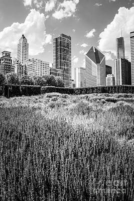 City Scenes Royalty-Free and Rights-Managed Images - Chicago Skyline Lurie Garden Black and White Photo by Paul Velgos