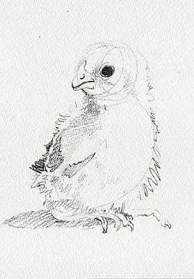 Drawing - Chick by Amy Bernays