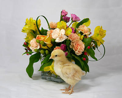 Photograph - Chick Art 1 - Floral  by Richard Reeve