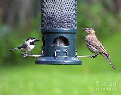 Photograph - Chickadee 2 And Housefinch by Lizi Beard-Ward