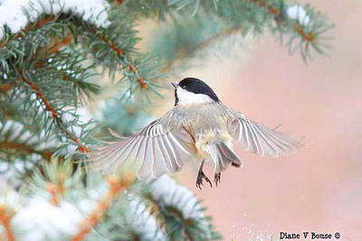 Chickadee Digital Art - Chickadee Angel by Diane V Bouse