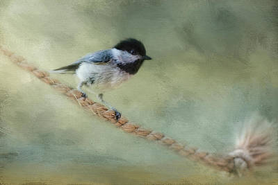 Chickadee At The Shore Print by Jai Johnson