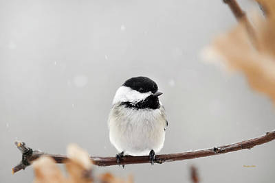 Print featuring the photograph Chickadee Bird In Snow by Christina Rollo