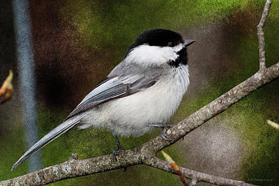 Photograph - Chickadee Close by WB Johnston