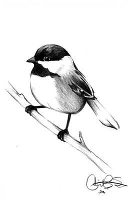 Chickadee Drawing - Chickadee by Corinne States