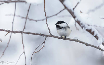 Photograph - Chickadee Eating A Sunflower Seed by Dee Carpenter