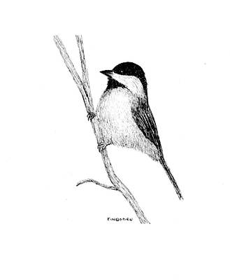 Chickadee Drawing - Chickadee by Ed Einboden