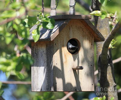 Chickadee In Birdhouse Art Print by Marjorie Imbeau