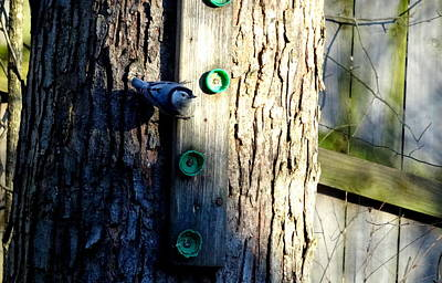 Photograph - Chickadee In Tree Feeder by Amanda Balough