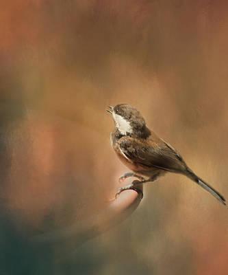 Photograph - Chickadee by Marilyn Wilson