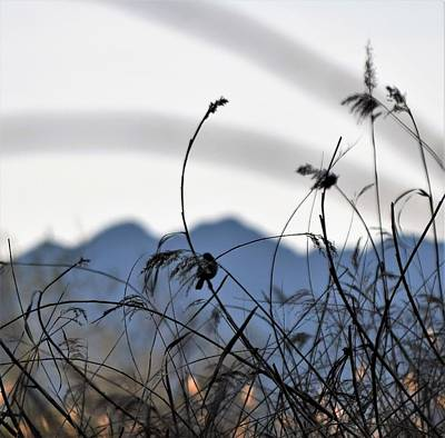 Photograph - Chickadee Meadow by John Glass