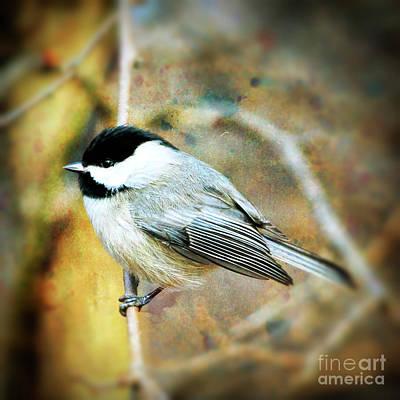 Chickadee Photograph - Chickadee Sweetness by Kerri Farley