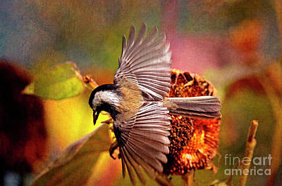 Photograph - Chickadee With Seed Textured by Sharon Talson