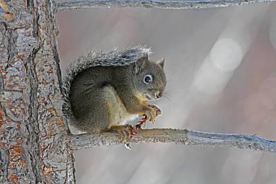 Grey Photograph - Chickaree by Gary Wing