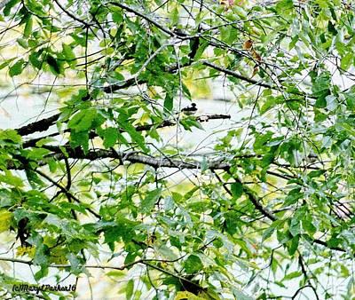 Chickadee Digital Art -   Chickadee  In  Hiding  by MaryLee Parker