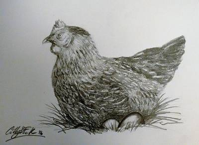 Drawing - Chicken Drawing by Caterina Frank