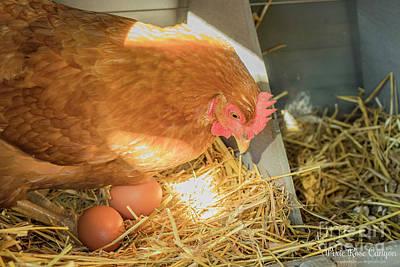 Photograph - Chicken Eggs by Danielle Allard