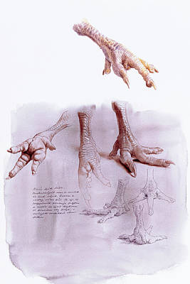 Painting - Chicken Foot Study by Attila Meszlenyi