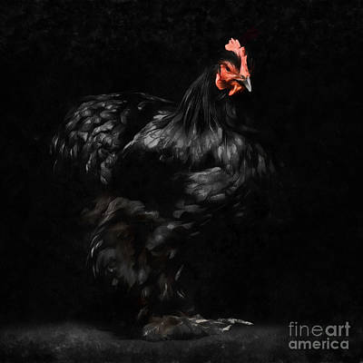 Digital Art - Chicken Painting by Edward Fielding