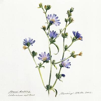Painting - Chicory by Attila Meszlenyi
