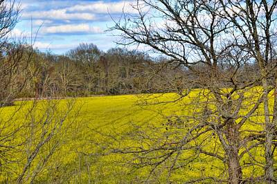 Photograph - Chicpea Fields by Diana Mary Sharpton