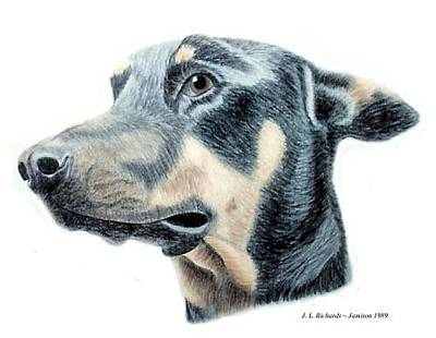 Drawing - Chien by Jennie  Richards