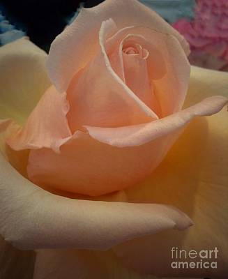 Photograph - Chiffon Rose by Joan-Violet Stretch