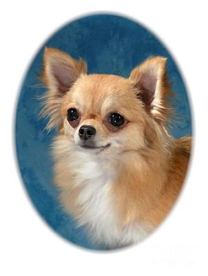 Chihuahua 966 Art Print
